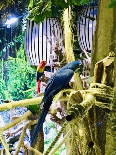 Dubai Mall Underwater Zoo